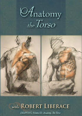 Anatomy: The Torso