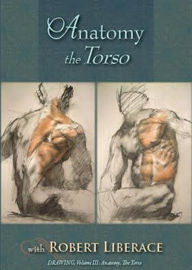 Anatomy: The Torso